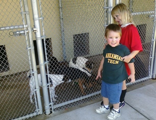 Kids enjoying meeting shelter dogs